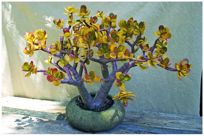 Related - Succulent container gardens debra lee baldwin ...