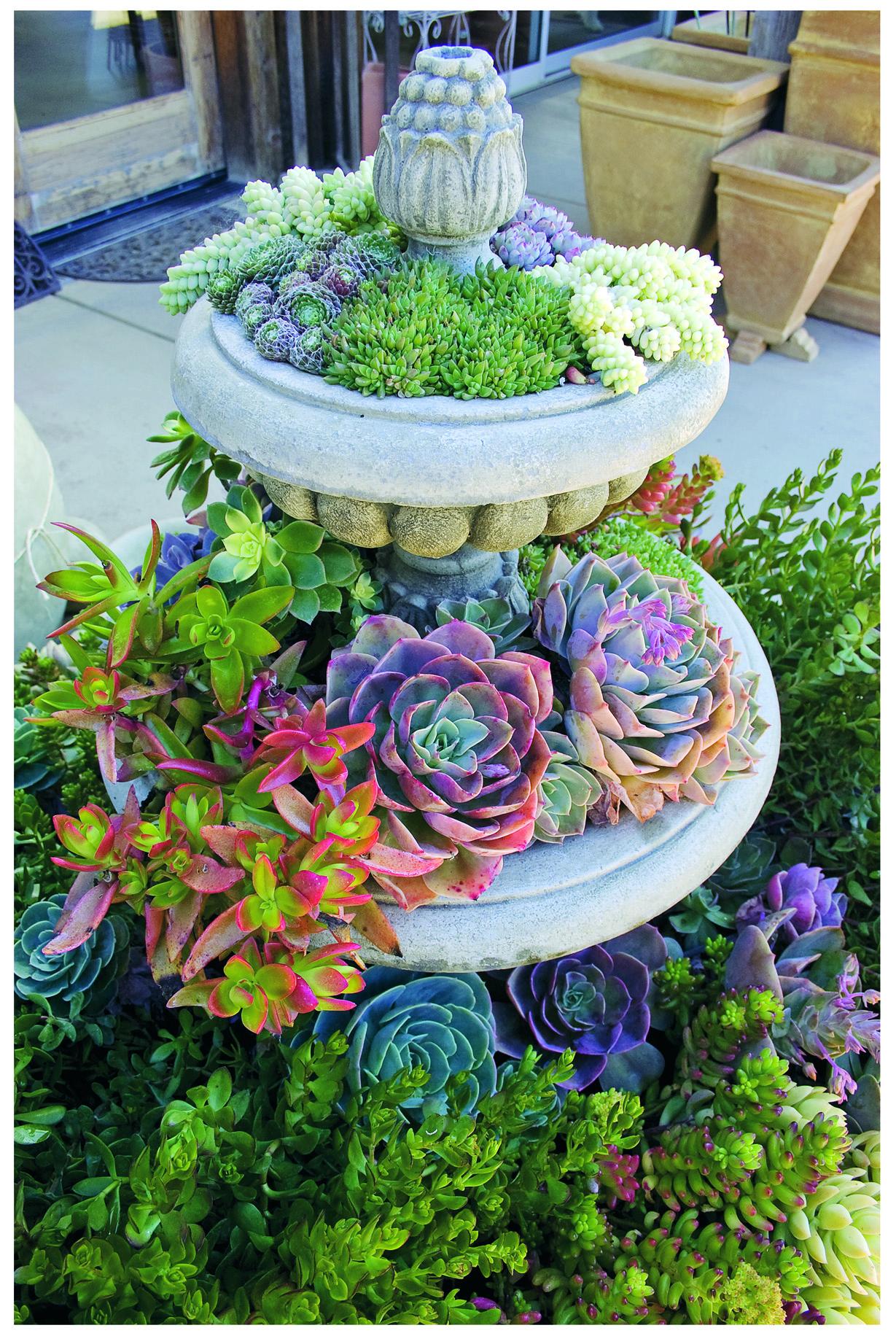 40 Unique & Fun Container Garden Ideas