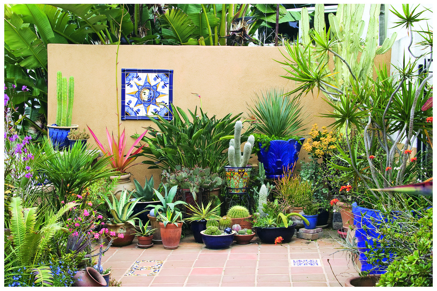 Book report succulent container gardens rancho reubidoux for Pot mural exterieur