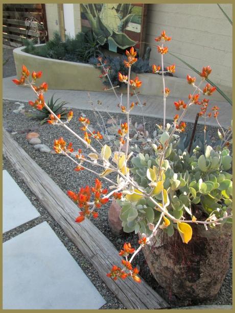 orangeblossoms