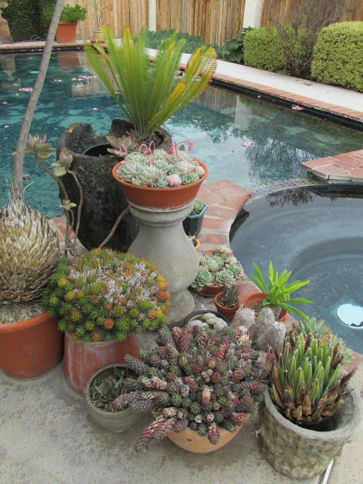 poolsucculents