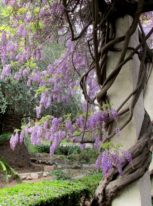 wisteriaclose