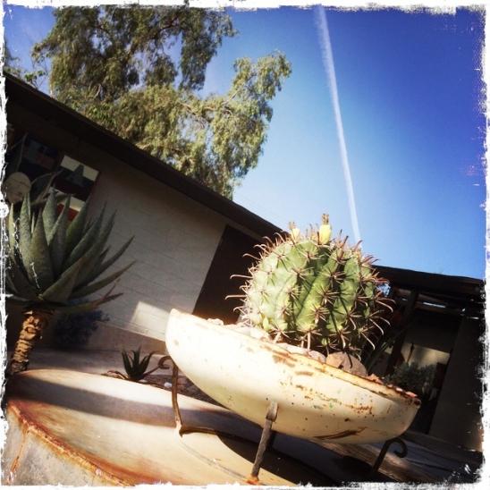 cactustrail