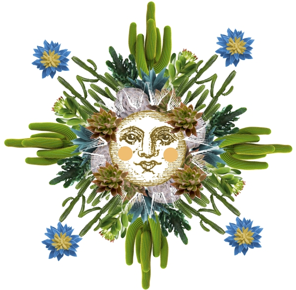 succulentsaleart